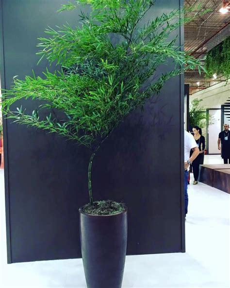 bambu in vaso vasos garden loca 231 245 es