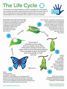 38 Best Life Cycles Images On Pinterest