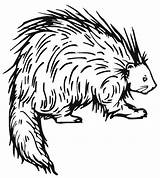 Porcupine Coloring Pages Porcupines Printable Prickly Drawing Letter Preschool Crafts Clipart Animal Line Friend Letters Outline Colouring American Printables Animals sketch template