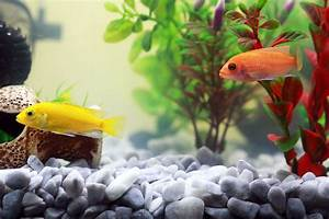 Fische Archive Haustiereat