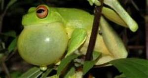 10 Things You Did Not Know About Croaking!