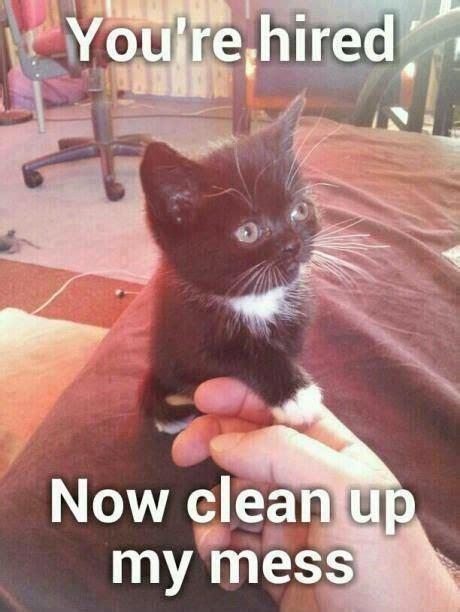 Animal Memes Clean - animal memes clean google search animal memes pinterest animal and cat