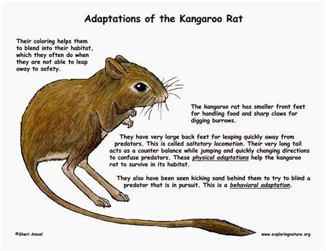 markulintags animal adaptations