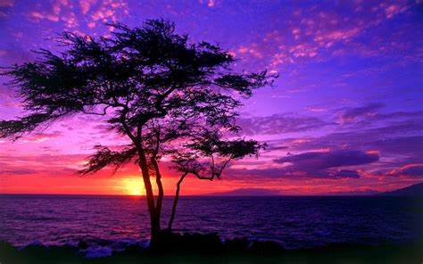 Beautiful Tree Wallpaper For Desktop by Wnp Wallpapers Pictures Widescreen Beautiful Trees