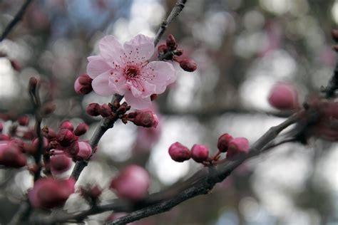 Free Images : tree nature branch fruit flower petal