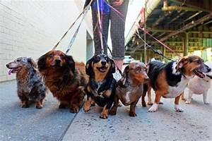 Dog training walking on leash dogtime for Puppy dog walker
