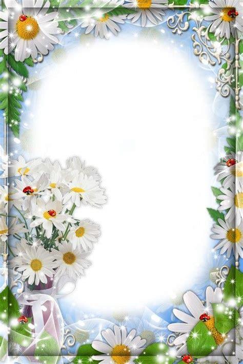 flower frame   photo white daisies flower frame