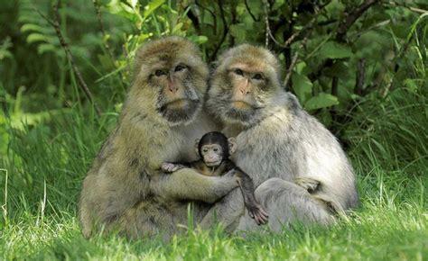 conmovedores retratos familiares de animales ellos
