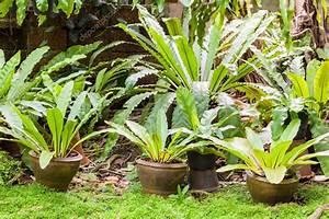 Farn Im Garten : tropischer farn pflanze im garten stockfoto cyberjade 32439715 ~ Orissabook.com Haus und Dekorationen