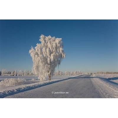 Winter Tartu County Estonia EuropeJaak Nilson Photostock