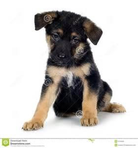 German Shepherd Police Dogs