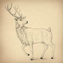 Draw Animal Drawings Deer