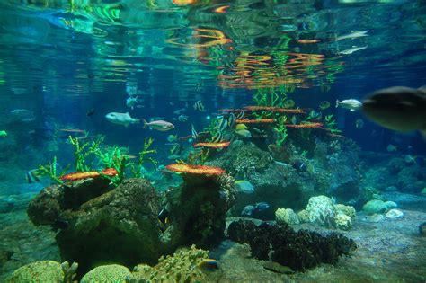 aquarium des deux oceans prot 233 ger les oc 233 ans c est rentable n 233 oplan 232 te