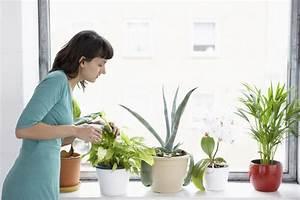 Zimmerpflanzen Für Wenig Licht : pflegeleichte zimmerpflanzen robuste topfpflanzen f r neulinge ~ Sanjose-hotels-ca.com Haus und Dekorationen