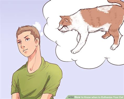 euthanize cat know euthanasia wikihow step