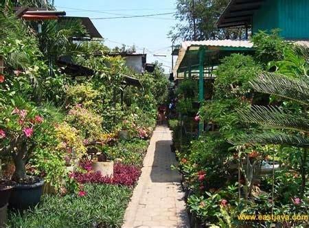 wisata unik  pasar bunga jalan kayoon surabaya tempat