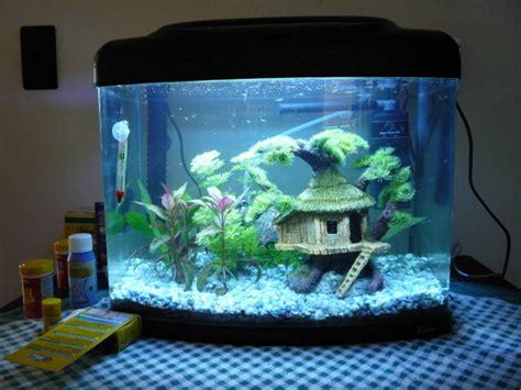 aquarium ideal pour combattant mes aquariums pr 233 sentation des bacs forum aquariophilie aquarium aquaryus