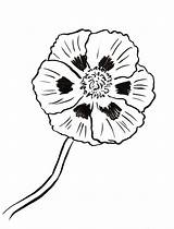 Poppy Coloring Printable Printables Samanthasbell sketch template