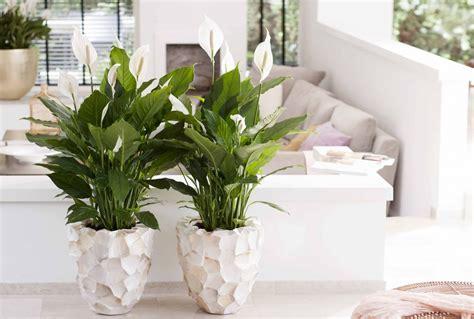 5 Zimmerpflanzen Für Dunkle Räume