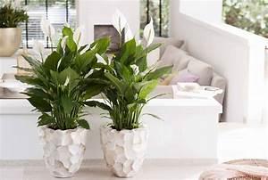 Grünpflanzen Für Dunkle Räume : 5 zimmerpflanzen f r dunkle r ume pflanzenfreude ~ Michelbontemps.com Haus und Dekorationen