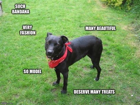 Such Dog Meme - image tagged in bandana dog imgflip