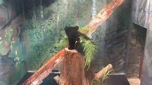 Otto Versand Rollos : otto rollo and summitt bear may 17 2017 youtube ~ Indierocktalk.com Haus und Dekorationen