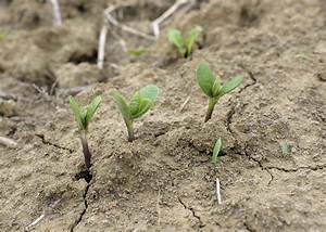 Growers plant soybeans well ahead of schedule ...