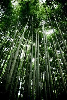 Lemuria Nursery by 1000 Images About Bamboo Forest On Pinterest Bamboo