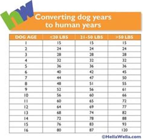 find   dogs relative age  human years