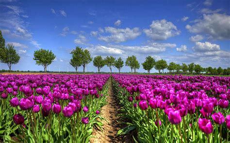bureau m騁al 22 lente wallpapers met bloemen bureaublad achtergronden