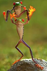Froggy style | Pinterest | To be, Trees and Red eyes