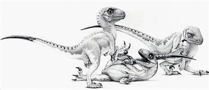 Jurassic Park Raptors Deviantart Raptor Velociraptor Three