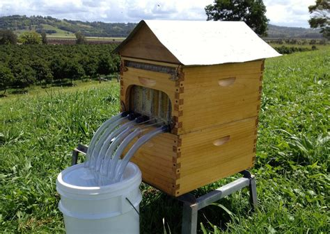 backyard honey bee hive new beehive harvests honey without bugging bees pictures