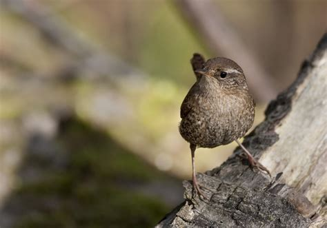 toronto  southern ontario birding view topic winter