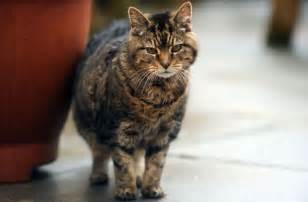 cat world the oldest cat living in the world on record
