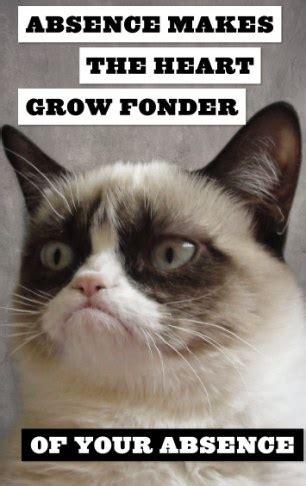 grumpy cat launches book    dislikes