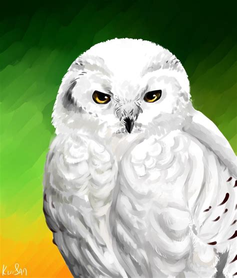Harry Potter Wallpaper Hedwig Owl by Hedwig Harry Potter By Viconbecon On Deviantart