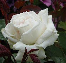 Resultado de imagen de fotos de rosas blancas