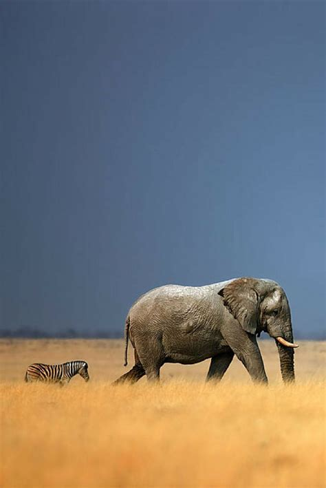Only Best 25+ Ideas About National Geographic On Pinterest