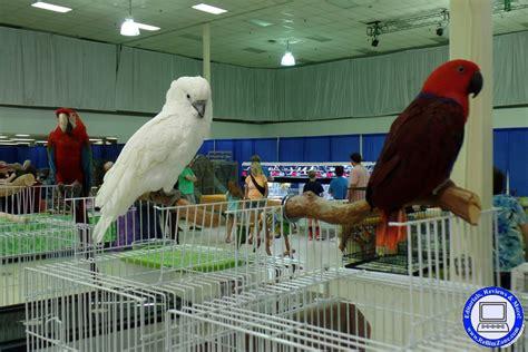 exotic bird show in atlanta women fatties sex