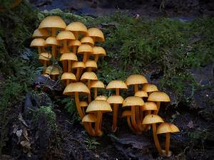Photos Of Extremely Unusual Mushrooms And Other Fungi By