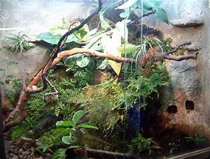 Pflanzen Für Terrarium : pflanzen im terrarium ~ Orissabook.com Haus und Dekorationen