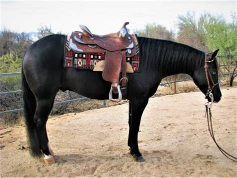 horses horse selling social performance wolfe steve provided horsenation