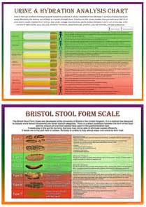 Bristol Stool Chart Analysis