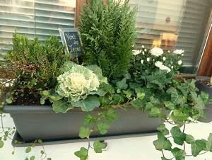 Plantes D Hiver Extérieur Balcon : plantes jardiniere hiver pivoine etc ~ Nature-et-papiers.com Idées de Décoration