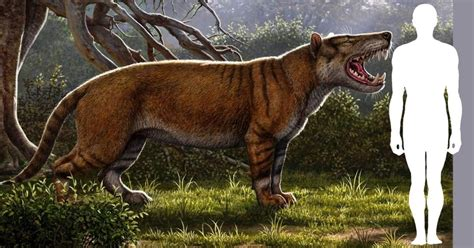species  giant fossil carnivore   kenya