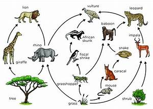 Science Ks  Food Web    Food Chain
