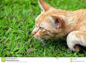 Stalking Cat Stock Photo - Image: 42029329