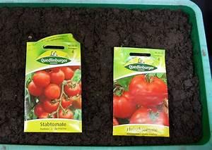 Tomaten Selber Ziehen : tomaten selber ziehen hier sind es tamina und marinade tomatensamen ~ Whattoseeinmadrid.com Haus und Dekorationen