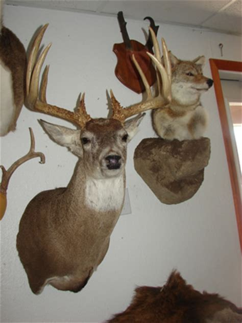 real wilderness taxidermy